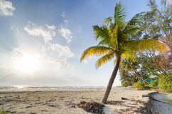 Palm tree leaf and palm trees. On beautiful beach near the sea Stock Photography