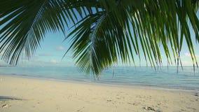 Palm tree leaf and sandy island beach. Beautiful sea view video stock footage