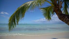 Palm tree leaf and sandy island beach. Beautiful sea view video. Palm tree leaf and sandy island tropical beach. Beautiful sea view, video stock video
