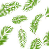 Palm Tree Leaf  Silhouette Seamless Pattern Background Royalty Free Stock Photo