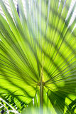 Palm tree leaf with striped shadow pattern Stock Images