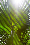 Palm tree leaf with striped shadow pattern Stock Photography