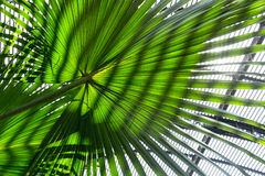 Palm tree leaf with striped shadow pattern Royalty Free Stock Photography