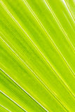 Palm tree leaf texture Stock Photos