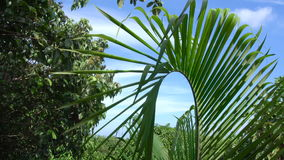 Palm Tree Leaf Tremling in Wind stock footage