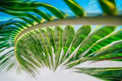 Palm tree leaf and tropical island beach. Natural texture backgr. Ound Stock Photo