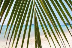 Palm tree leaf. View of beach through palm tree leaf Royalty Free Stock Images