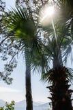 Palm tree leafes. Against sunshine Stock Image