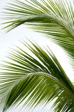 Palm tree leafs Stock Photos