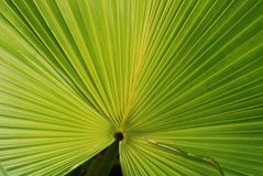 Palm tree leafs. Inside the gardens stock photo