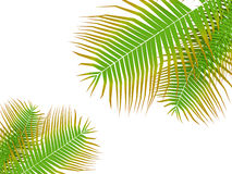 Palm tree leafs Royalty Free Stock Photos