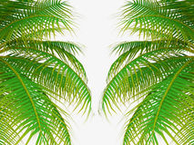 Palm tree leafs Stock Image