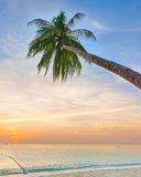 Palm tree leaning over the ocean Stock Photo