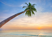 Palm tree leaning over the ocean Stock Image