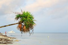 Palm Tree Leaning Over Sea With Ship and Fisherman stock image