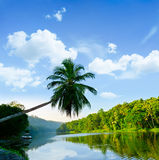 Palm tree leans over the tropical river Stock Image