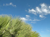 Free Palm Tree Leaves Royalty Free Stock Photo - 12523395