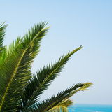 Palm tree leaves Royalty Free Stock Image