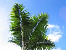 Palm tree leaves. Three leaves of a palm tree against sky/clouds Stock Image