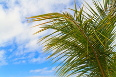 Palm tree leaves Stock Image
