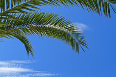 Palm tree leaves Royalty Free Stock Photography