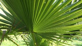 Palm Tree Leaves stock video
