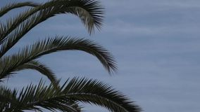 Palm Tree stock video