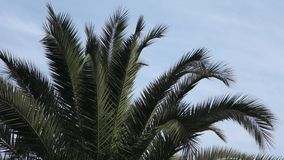 Palm Tree stock video footage