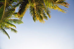 Palm tree leaves against blue sky Royalty Free Stock Photography