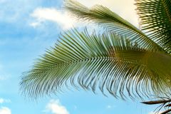 Palm tree leaves against the blue sky stock photo