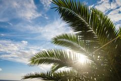 Palm tree leaves against sunset light. Palm tree leaves against sunset sun light and blue sky with clouds. outdoor shot on Tenerife Royalty Free Stock Photography