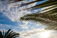Palm tree leaves against sunset light. Palm tree leaves against sunset sun light and blue sky with clouds. outdoor shot on Tenerife Stock Photo
