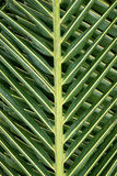 Palm tree leaves background Royalty Free Stock Images