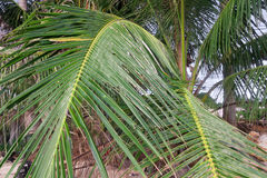 Palm tree leaves on the beach Royalty Free Stock Photo
