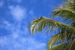 Palm tree leaves on blue sky Stock Photo