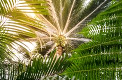 Palm tree leaves with bokeh made of sunset light. Selective focu stock photos
