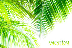 Palm tree leaves border Stock Images