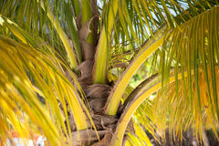 Palm tree leaves in the caribbean Stock Photo