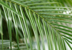 Palm Tree leaves Stock Photos
