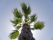 Palm Tree Leaves And Cloudscape. Palm tree top up into the sky Royalty Free Stock Images