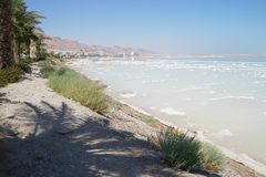 Palm tree leaves and Dead sea Stock Photos