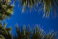 Palm tree leaves  with free text space, Tropical Background. Stock Photos