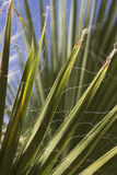 Palm Tree Leaves. Green palm tree leaves in a desert environment Stock Photography