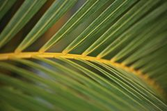 Palm tree leaves green fanned Stock Photos