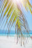 Palm tree leaves over luxury beach. Palm tree leaves over luxury white tropical beach Royalty Free Stock Image