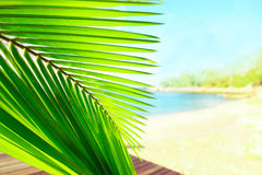 Palm tree leaves over peaceful tropical beach background, blue sea landscape card Royalty Free Stock Image