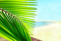 Palm tree leaves over peaceful tropical beach background, blue sea landscape card Stock Image