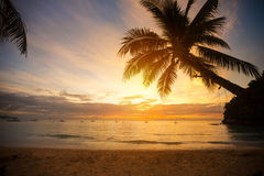 Palm tree leaves over sunset Stock Images