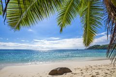 Palm tree leaves over tropical sandy beach royalty free stock photography