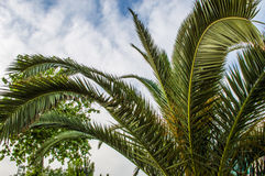 Palm Tree Leaves in Perspective Stock Images